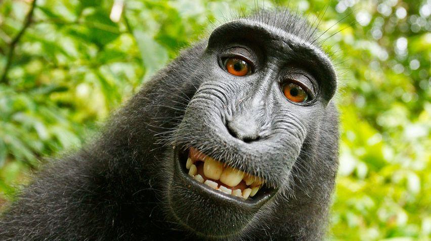 L'une des photos réalisées par le singe Naruto en 2011