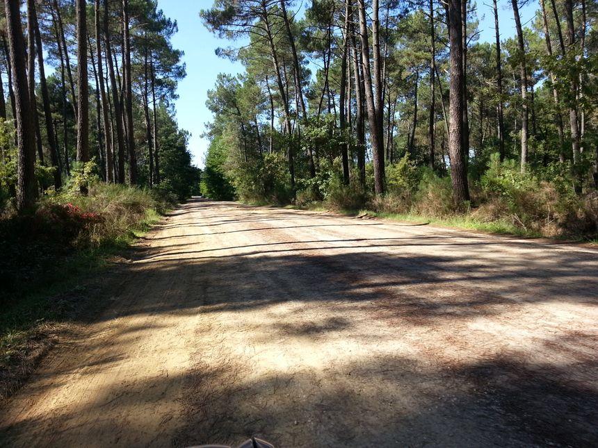 Gironde : La forêt d'aulnes de Jacques se trouve au milieu des forêts de pins.