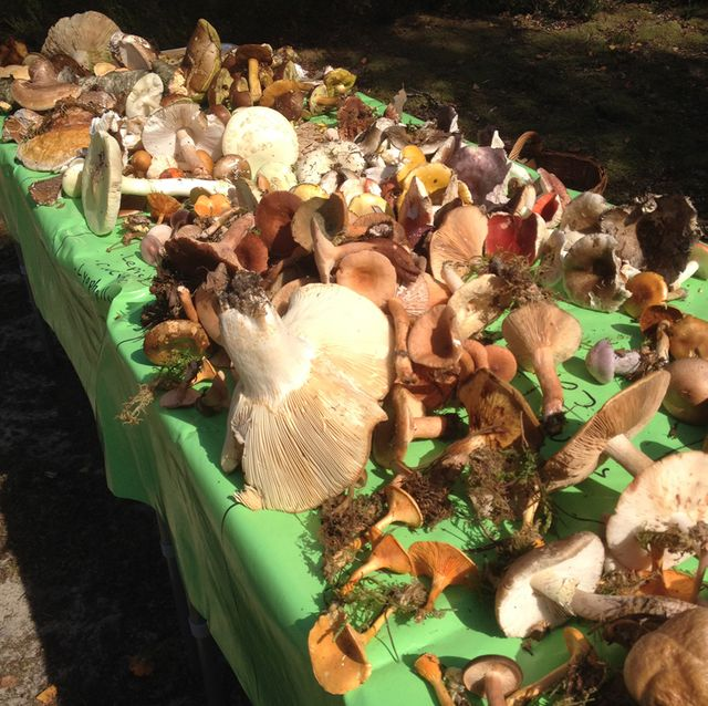 Cueillette de champignons en forêt de Nemours