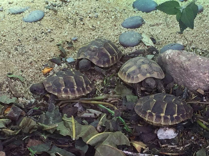 """Les frères et soeurs de la tortue """"Hope"""""""
