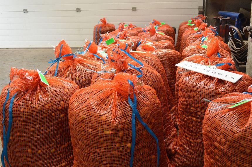 Les premiers sacs de glands de la récolte 2015, conservés au sec par l'ONF.