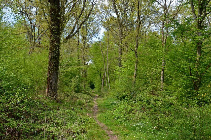 La forêt de Fontainebleau, au printemps