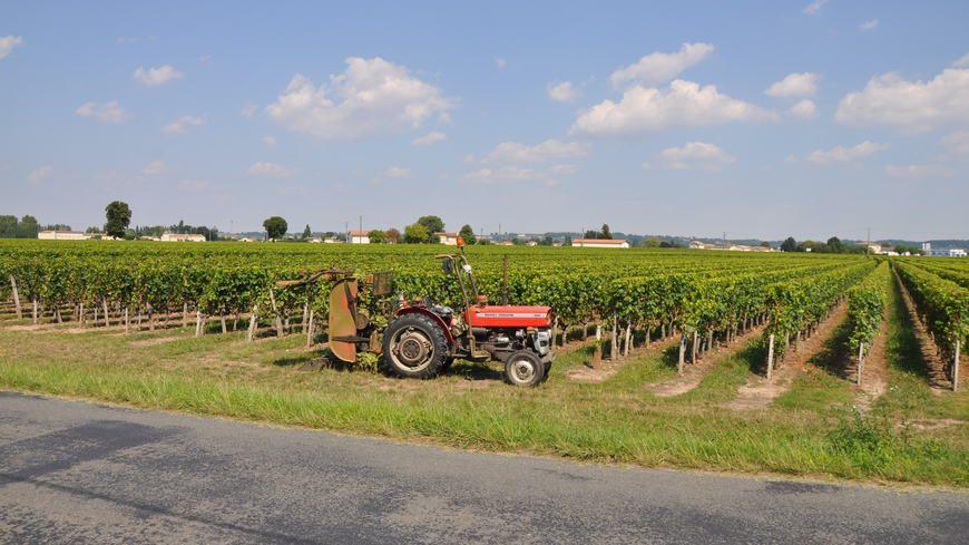 Le travail dans la vigne (illustration)