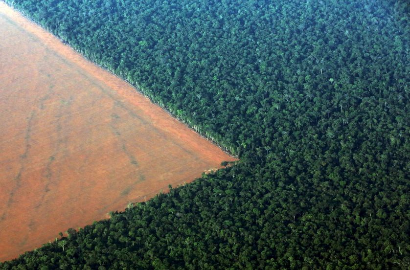 La forêt amazonienne déboisée