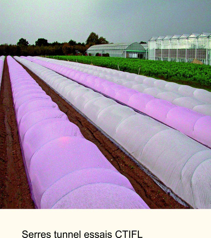 Le rendement des melons s'accroît de 10 à 15 % sous serre colorée