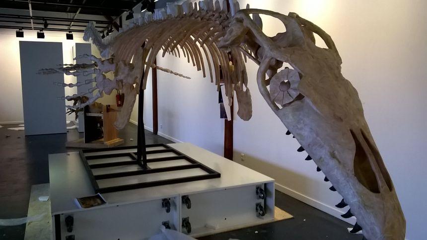 Le squelette du mosasaure, un reptile marin long de 7 mètres.