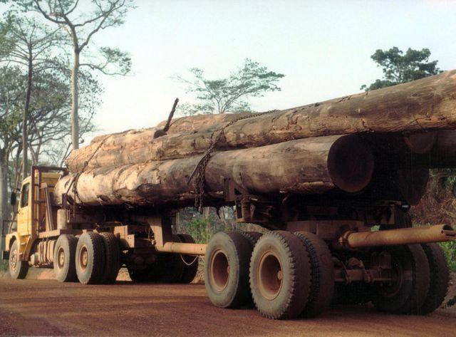 Les terres vierges manquent et ces 22 millions d'hectares de forêt dense sont une aubaine