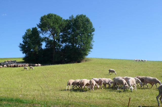 Arvieu (Aveyron)