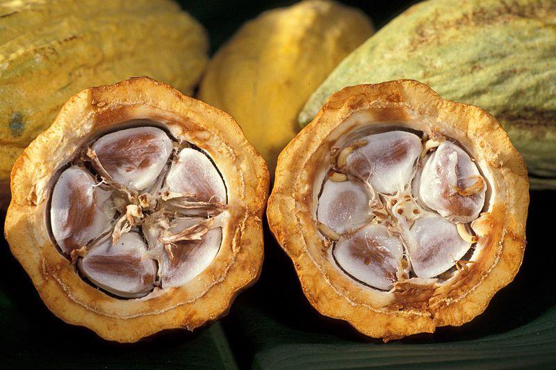 Graines de cacao dans le fruit