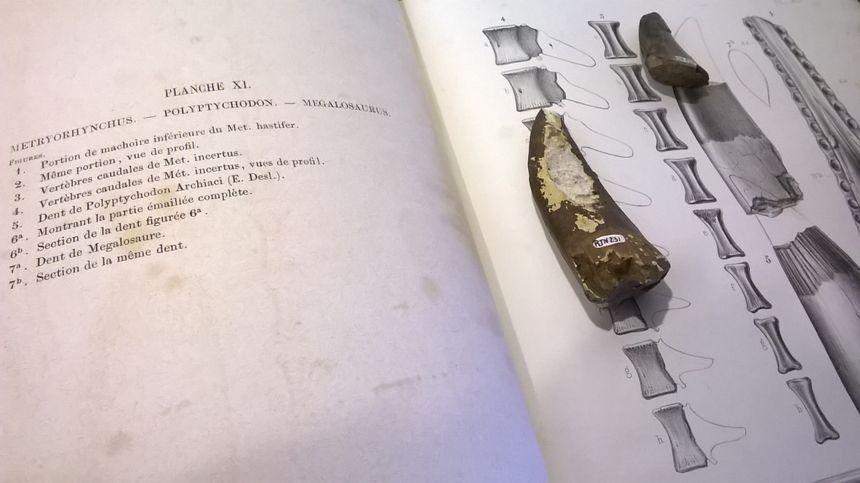 Pour reconstituer les squelettes, l'équipe du musée s'aide de livres spécialisés