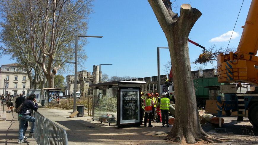 Des platanes ont déjà été arrachés cours Kennedy à Avignon au printemps