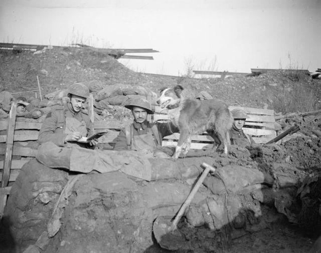 Chien-messager du 10ème Bataillon du Régiment de Manchester en janvier 1918 à Cuinchy