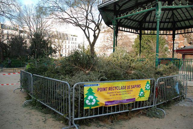 Recyclage de sapins à Paris