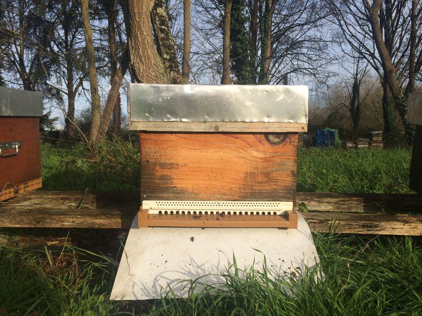 apiculteur indre et loire