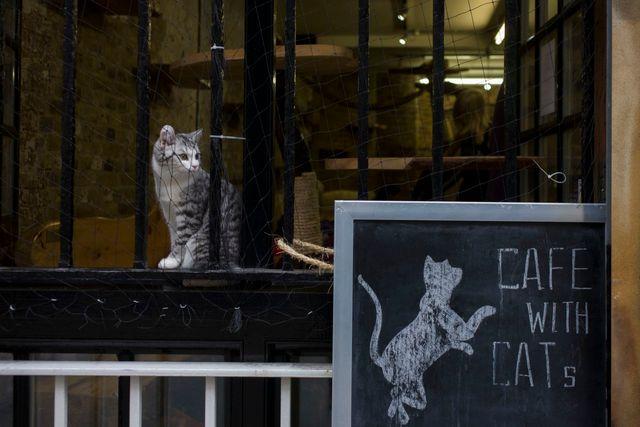 Café avec des chats