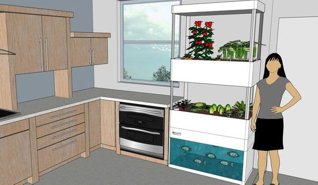 aquaponie Risebox