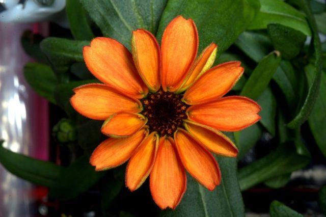 la fleur de l'espace