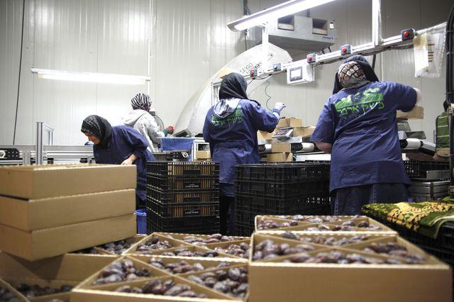 Dans l'atelier d'emballage d'Iron Rosenblum où travaille une vingtaine de Palestinien-ne-s