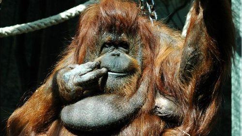 Phénoménologie du monde animal