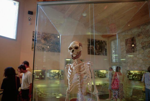Squelette du plus vieux des Européens : l'homme de Tautavel