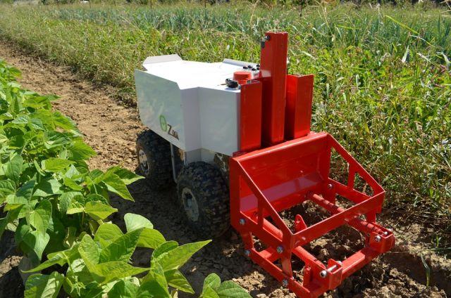 Le Robot OZ se faufile et désherbe entre les rangs de légumes