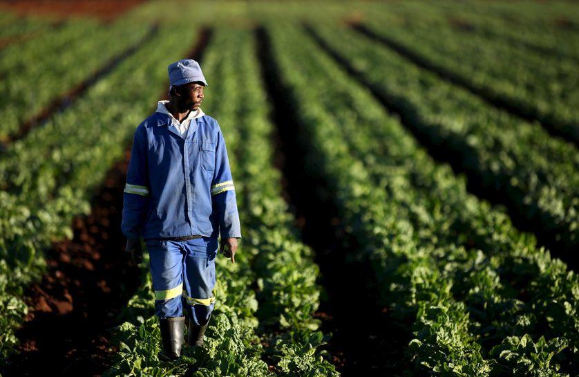 Un agriculteur dans ses champs en Afrique du Sud