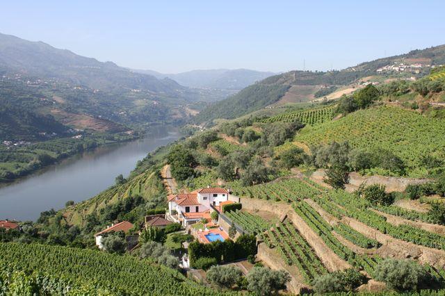 Les vignobles de Porto