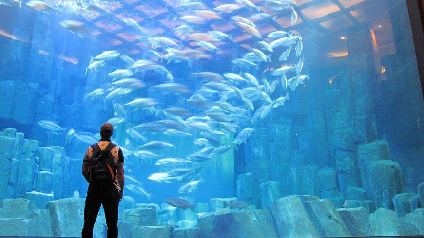 l 39 aquarium de paris licencie faute de visiteurs apr s les attentats. Black Bedroom Furniture Sets. Home Design Ideas