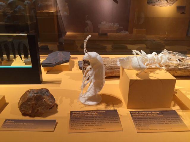 Des reproductions d'insectes en 3D agrandie, au Musée Vert.