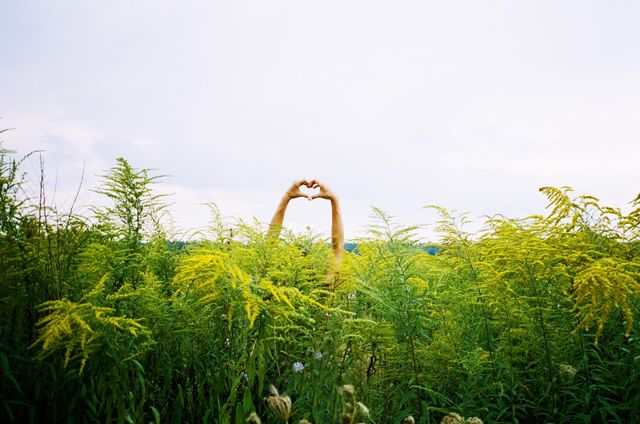 Cœur avec les doigt dans un champ