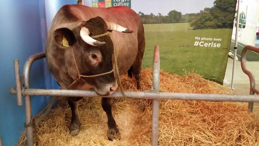 Cerise la star du salon de l 39 agriculture s 39 invite bordeaux - Salon de l agriculture machine agricole ...