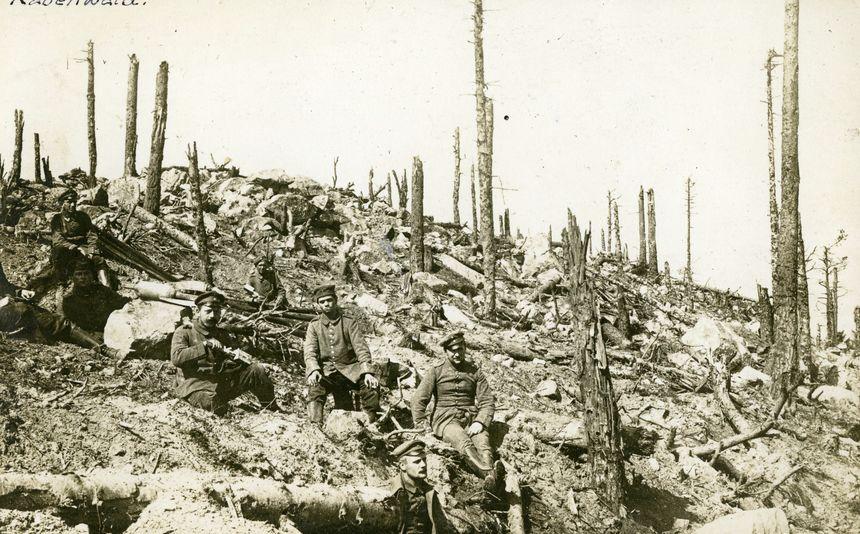 Le bois de Rabenwald, décimé