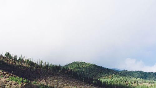 Extractivisme (3/5) : La forêt qui cache la déforestation