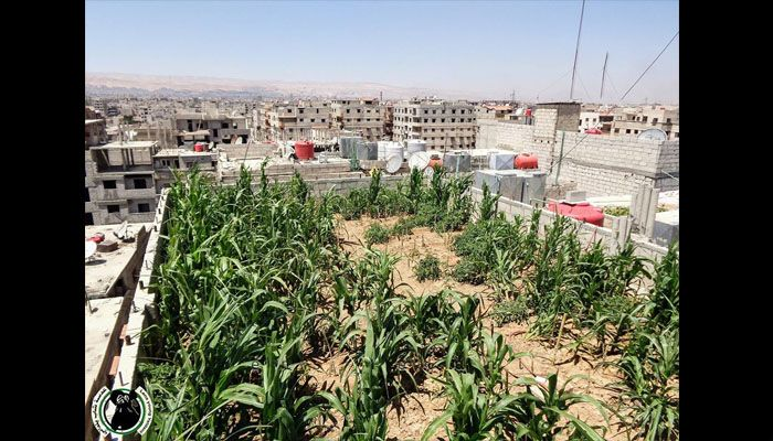 Jardins sur les toits de Damas