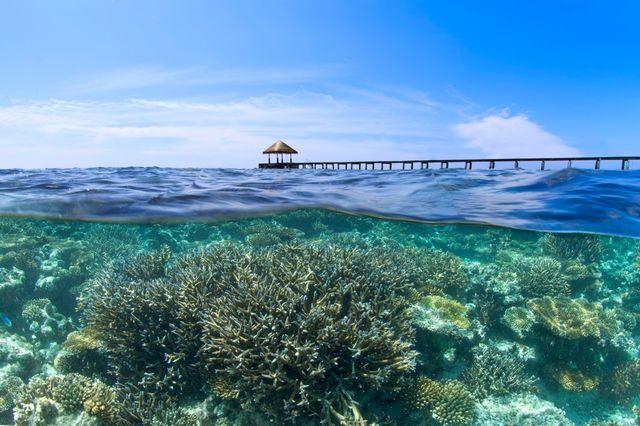 Jetée au-dessus d'une barrière de corail, Velidhu Island, Maldives