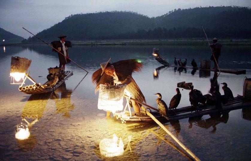 Des pêcheurs dans la province du Zhejiang, avec leurs cormorans pêcheurs
