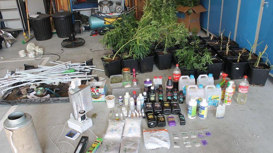 limousin un cultivateur de cannabis indoor repr et interpell grce une annonce sur internet