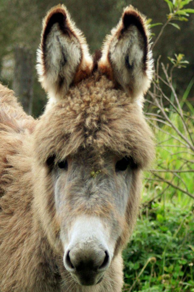 Les ânes d'Arizona se reproduisent sans limites