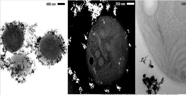 Agrégats de nanoparticules de Ti02