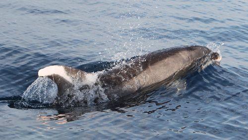 Épisode 2 : Le langage des dauphins