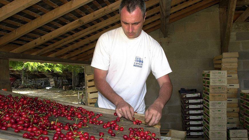Les producteurs de cerises sont mardi au Ministère de l'Agriculture