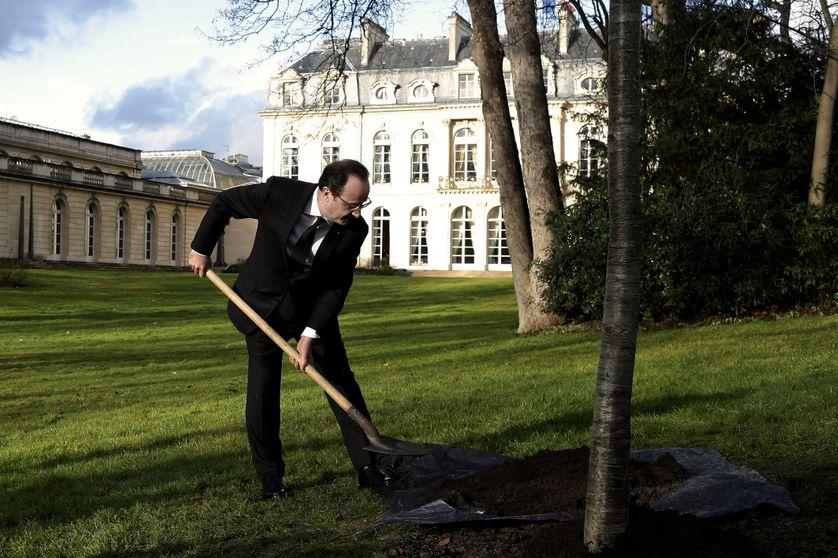 Plantation d'un chêne dans les jardins de l'Elysée, en février 2015
