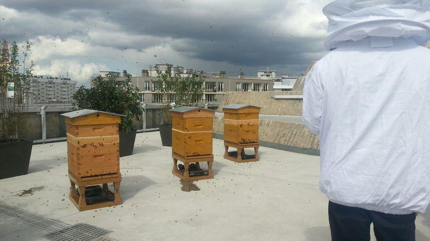 Les ruches du siège du PCF, à Paris