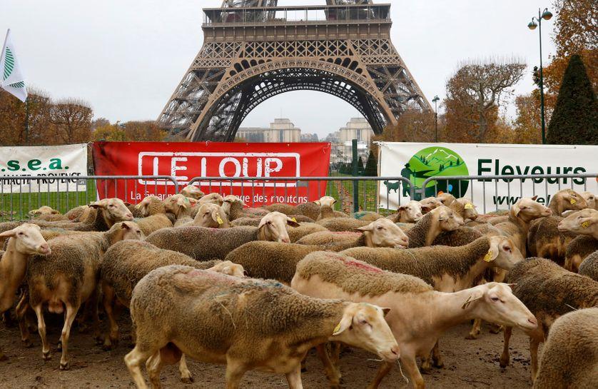 Manifestation de bergers contre la protection du loup à Paris en 2014