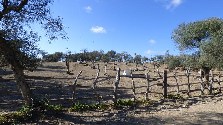Ambiance Far West dans l'élevage Nuñez del Cuvillo en Andalousie.
