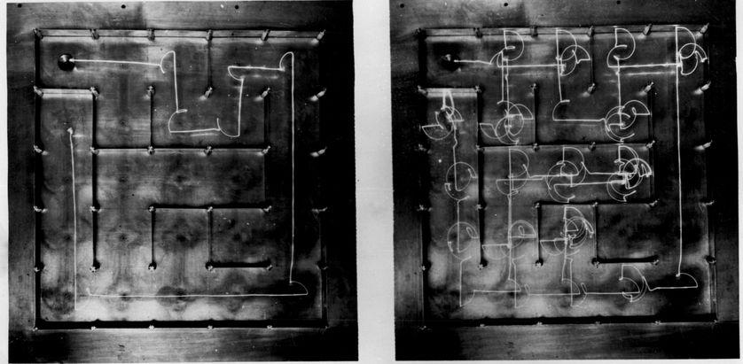 """la """"souris électrique"""" avec une """"super mémoire"""", invention de Claude Shannon"""