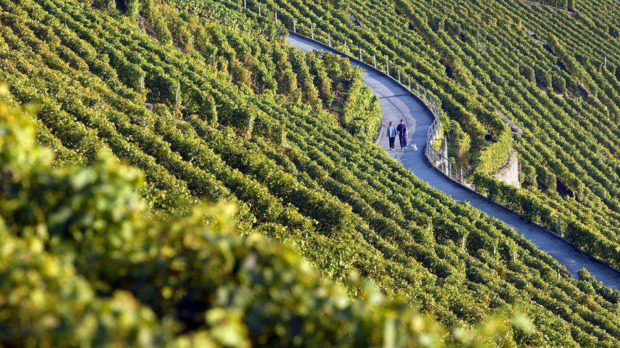 des vignes en Bourgogne