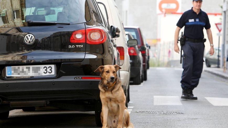 Le laboratoire Animagene se lance dans l'identification des chiens via l'ADN