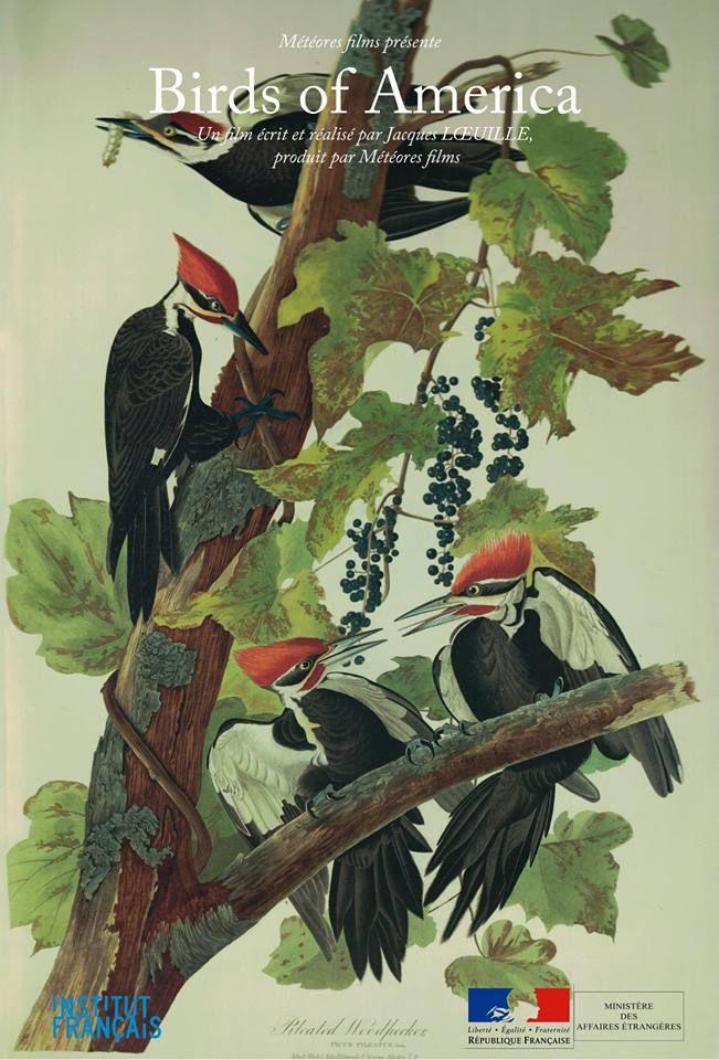 documentaire Birds of America