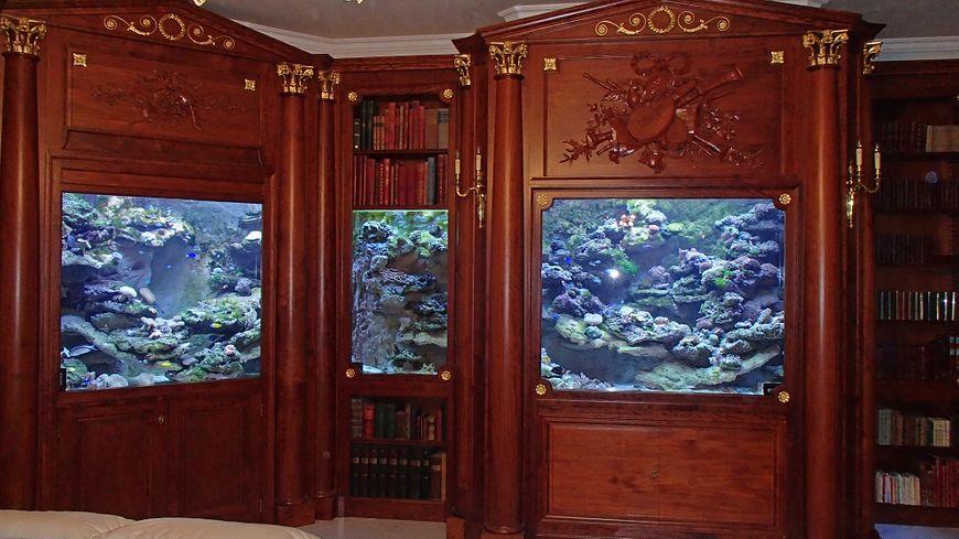 Une bibliothèque-aquarium, installée chez un particulier